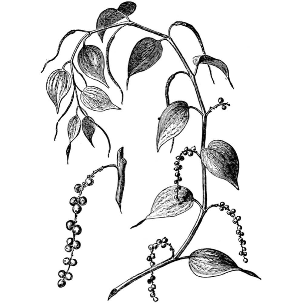 Začimba - Poper